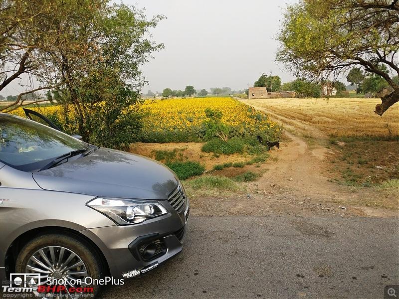 Maruti Ciaz ZDi+ SHVS - Ownership Review at 50,000 km!-3.jpg