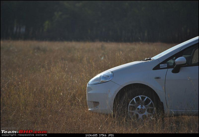 FIAT-Ferrari in affordable trim - My Grande Punto 1.2 Emotion-dsc_7426.jpg