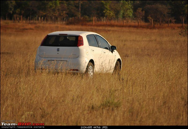 FIAT-Ferrari in affordable trim - My Grande Punto 1.2 Emotion-dsc_7430.jpg