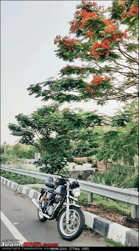 Royal Enfield Continental GT 535 : Ownership Review (27,000 km and 6 years)-gt.jpg