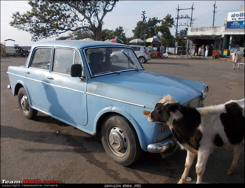 Restored Fiats (Super Select & Others)-blore-12302014-217.jpg