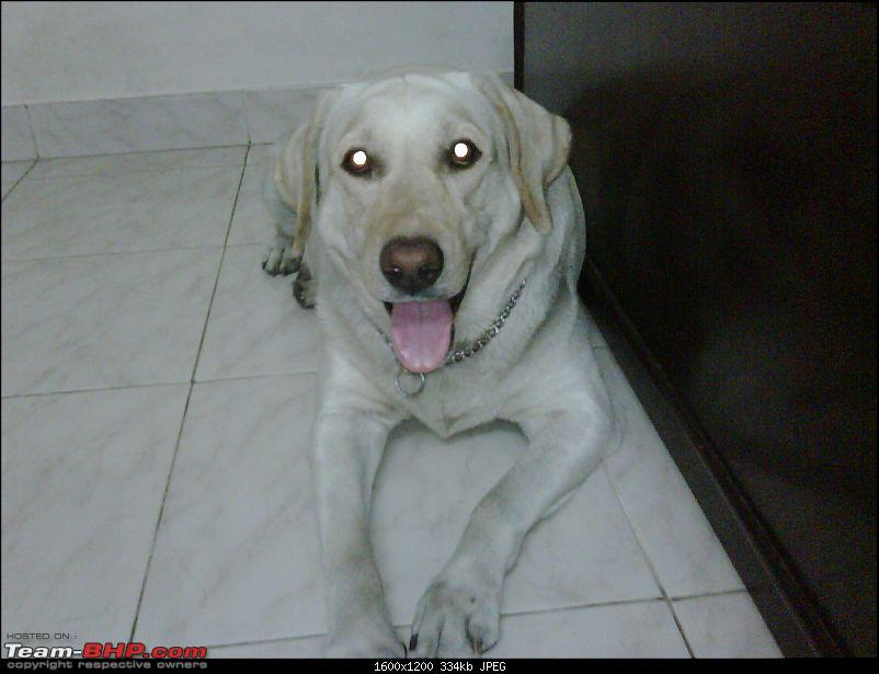Route info and Human companion needed from Bangalore to Gurgaon (with 3 dogs) :D-img00003200901071713.jpg