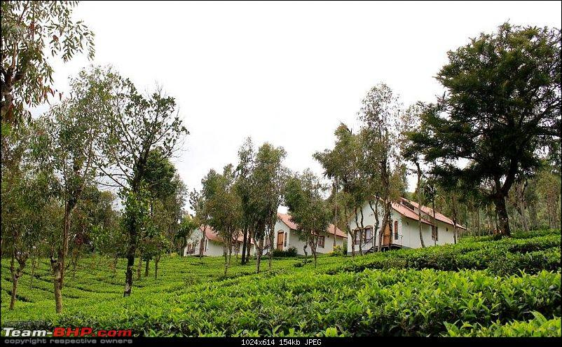 Bangalore-Wayanad: Route & Accommodation-tea-terrace.jpg
