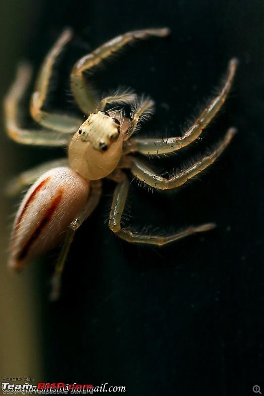 Route Info Needed - Mumbai to Bandhavgarh, M.P-jumping-spider-full.jpg