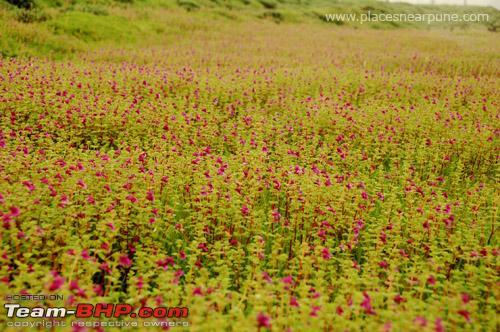 Name:  flowers.jpg Views: 12133 Size:  134.3 KB