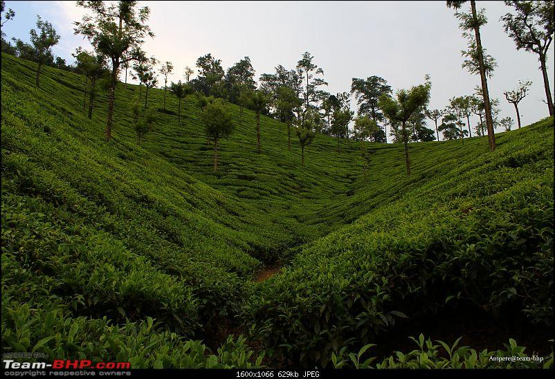Valparai - Stay and other info-img_1986_wm.jpg