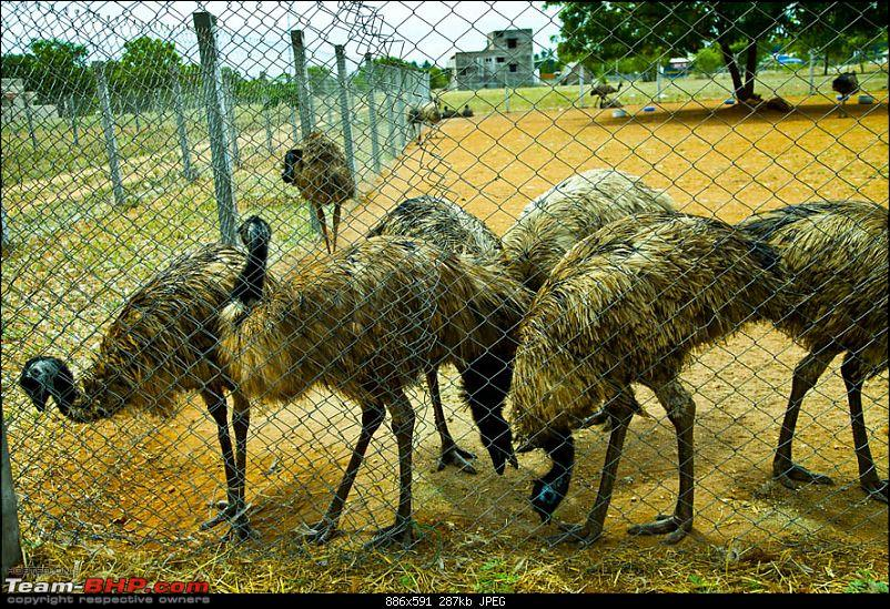 All Roads to Kerala-emu-friends....jpg