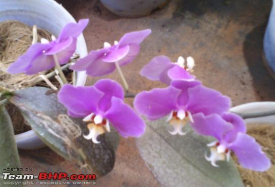 Name:  Orchid_1.PNG Views: 423 Size:  567.2 KB