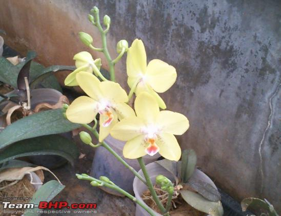 Name:  Orchid_3.PNG