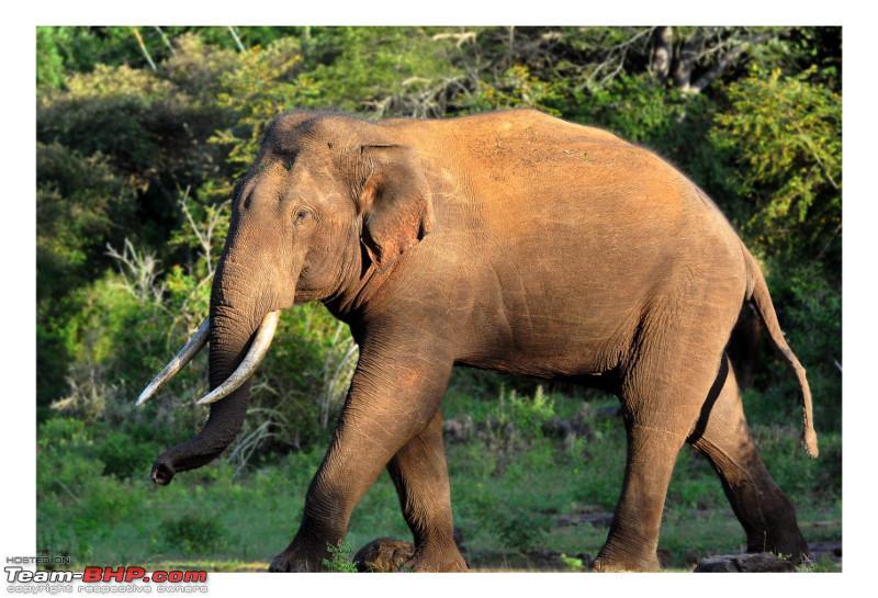 Name:  Tusker.jpeg Views: 432 Size:  186.0 KB