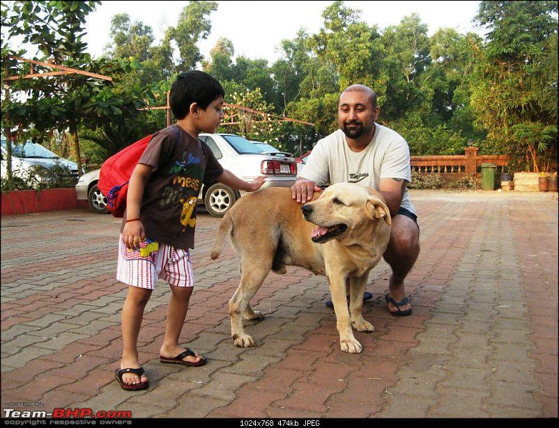 Team-BHPians and their Pets-img_6471.jpg