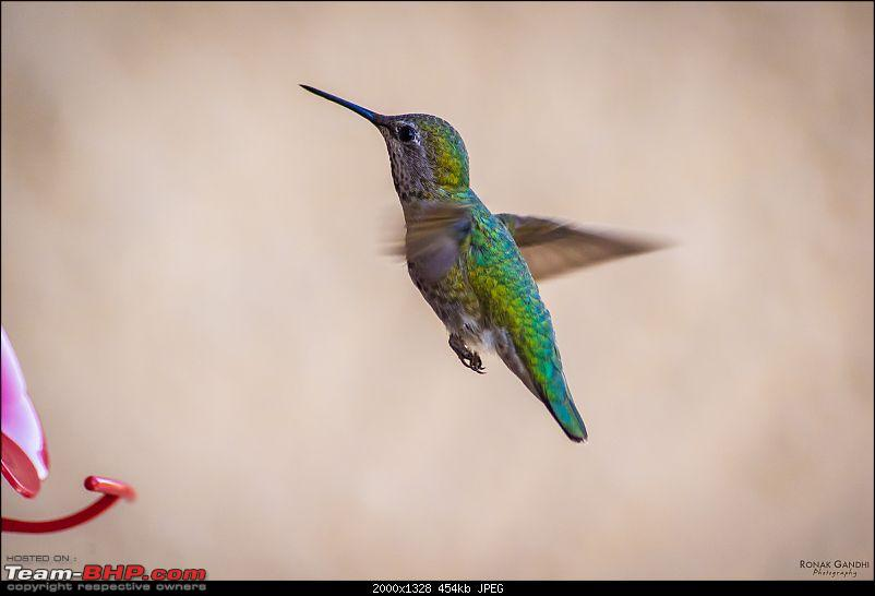 The Official non-auto Image thread-20130519hummingbird0011.jpg