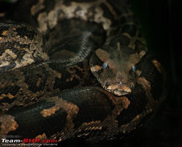 Name:  Python_small.jpg Views: 537 Size:  75.4 KB