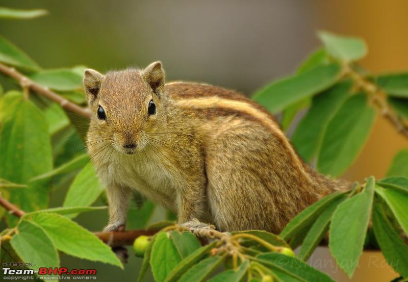 Name:  curious squirrel.jpeg