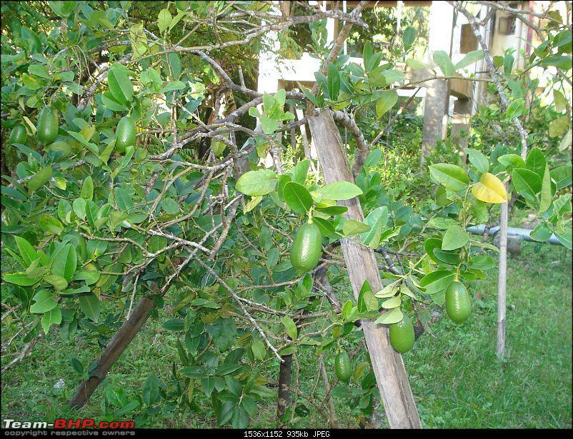 Gardening experts in tbhp?-dsc08448.jpg