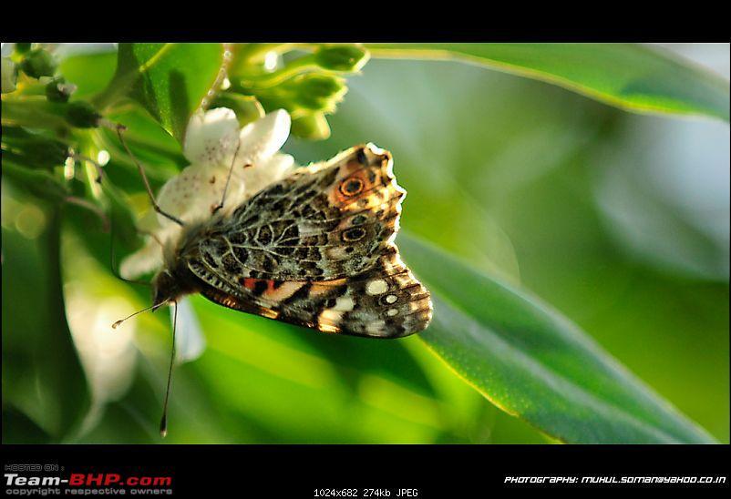 The Official non-auto Image thread-3394075085_2893754393_b.jpg