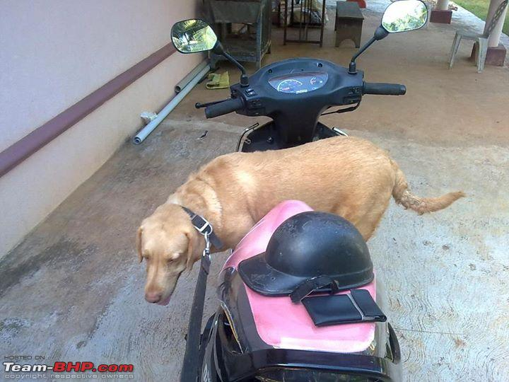 Name:  tuffy on scooter.jpg