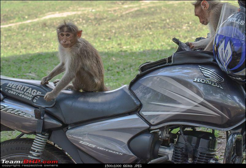 The Official non-auto Image thread-tbhp_daredevil_monkeys_on_bike_2.jpg