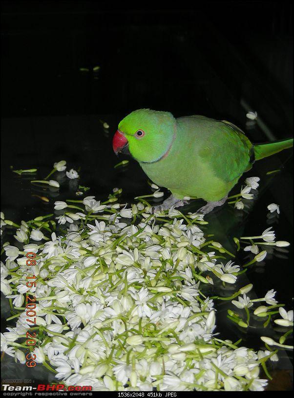 Team-BHPians and their Pets-flowers.jpg