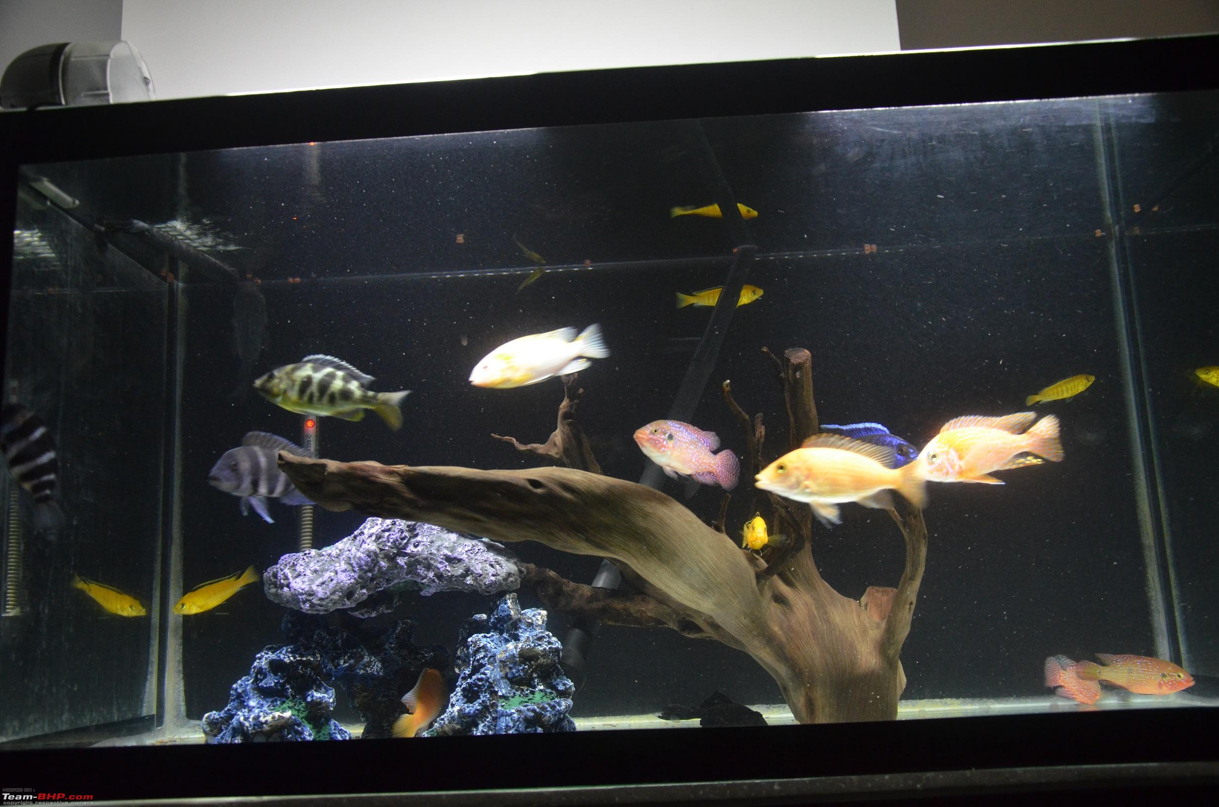 feeder food room aquarium tilapia fish for youtube automatic watch
