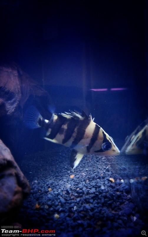 My Fishkeeping hobby-img20151109wa001821.jpg