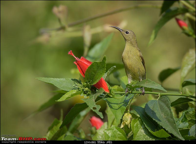 The Official non-auto Image thread-sunbird-female2.jpg