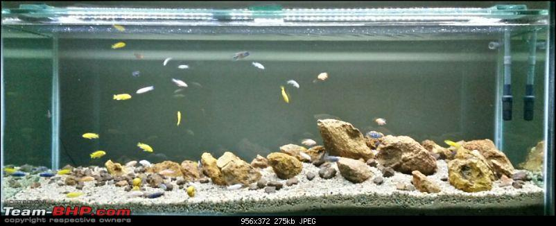 My Fishkeeping hobby-20151229-09.43.16.jpg