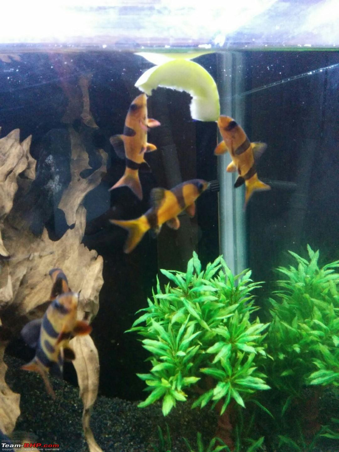 Fish aquarium price in bangalore - My Fishkeeping Hobby Img20160102wa0006 Jpg