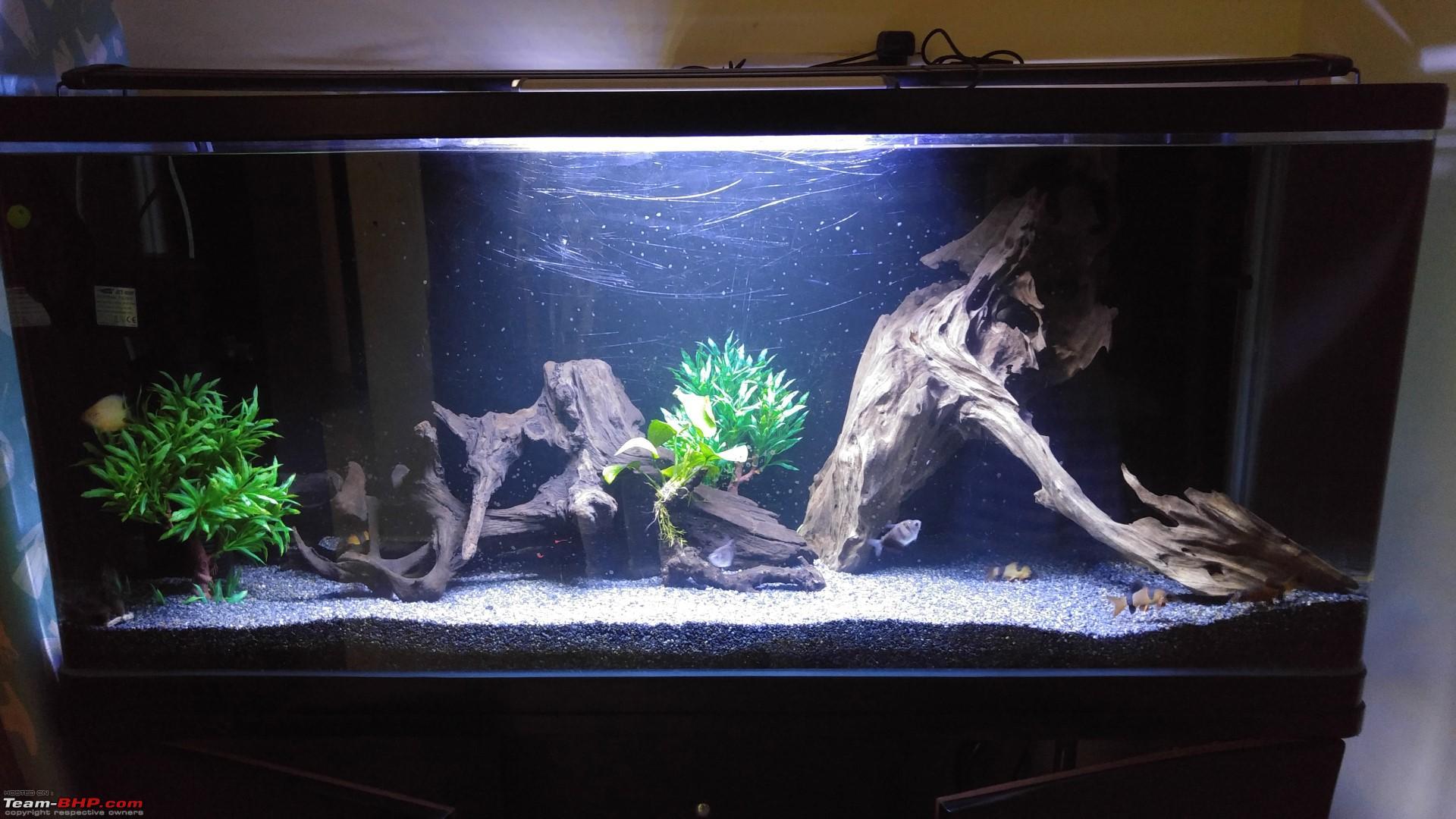 Aquarium fish tank price in bangalore - My Fishkeeping Hobby 20160104_202145 Jpg