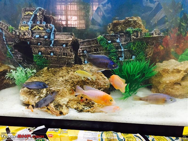 My Fishkeeping hobby-fullsizerender_3.jpg
