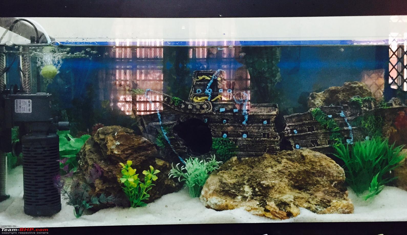 Fish aquarium in gurgaon - My Fishkeeping Hobby Fullsizerender Jpg