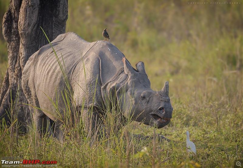The Official non-auto Image thread-hifi-rhino3.jpg