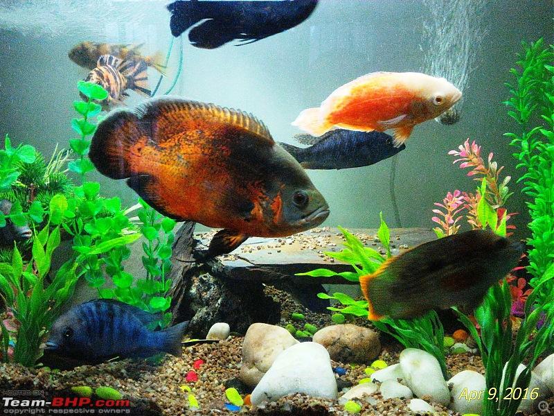 My Fishkeeping hobby-2.jpg