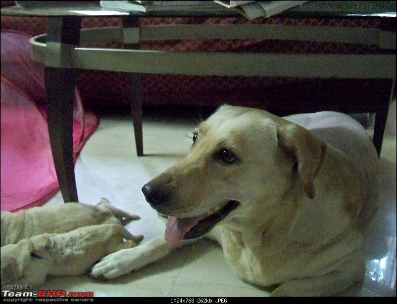 Advice needed for a newbie dog owner. The Enzo Diary...-image00022.jpg