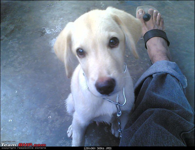 Team-BHPians and their Pets-10072009.jpg