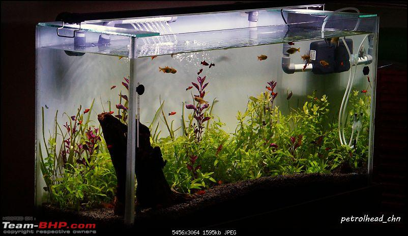 My Fishkeeping hobby-dsc02195.jpg