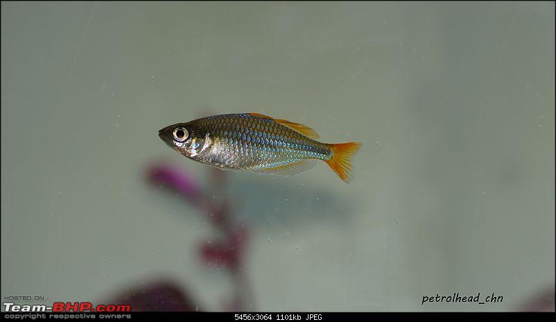 My Fishkeeping hobby-dsc01933.jpg