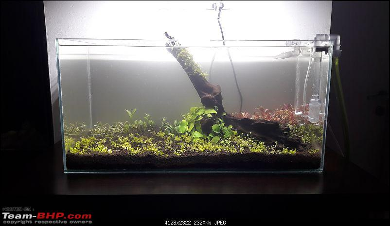 My Fishkeeping hobby-20170417_002745.jpg