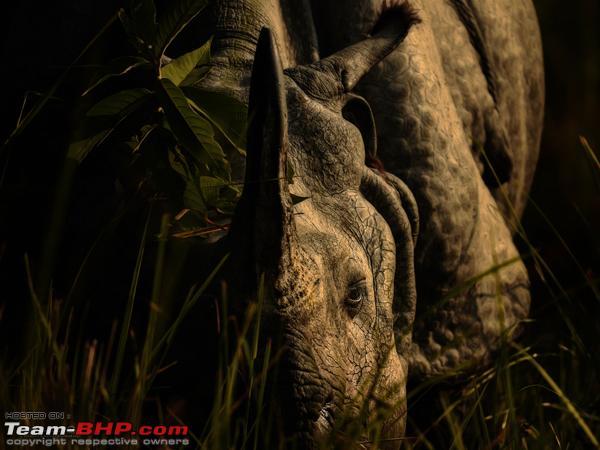 Name:  Rhino.jpg Views: 173 Size:  214.5 KB