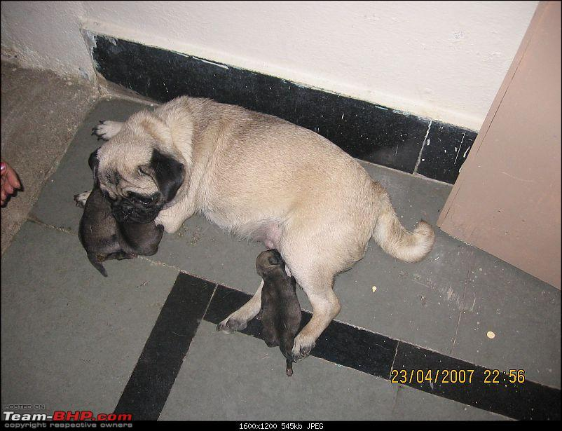 Team-BHPians and their Pets-picture-583.jpg