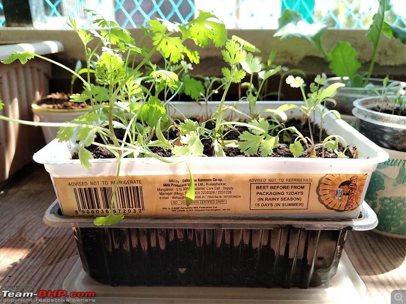 Gardening experts in Team BHP?-9.jpg