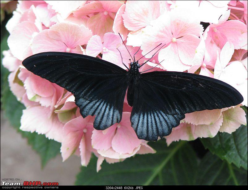 The Official non-auto Image thread-butterfly.jpg