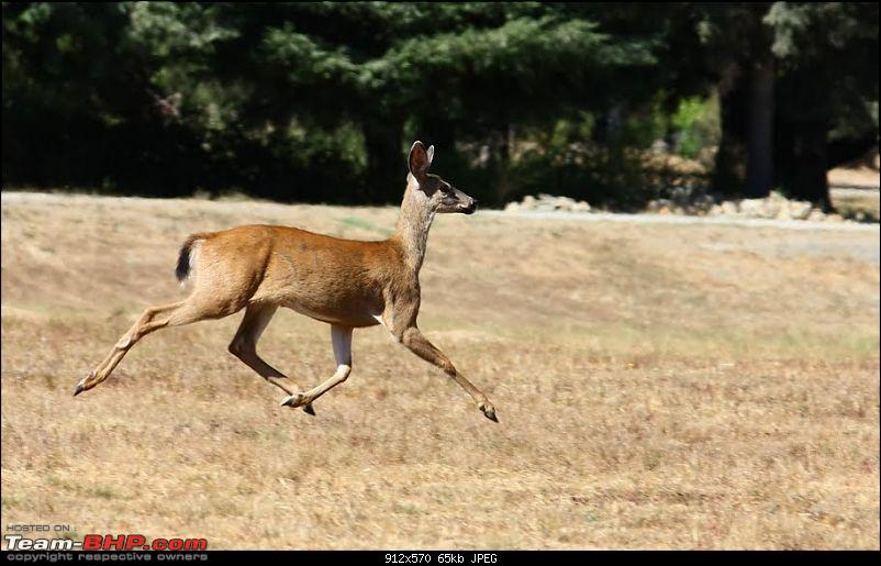The Official non-auto Image thread-deer.jpg
