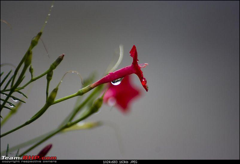 The Official non-auto Image thread-rain-drop-red-flower.jpg