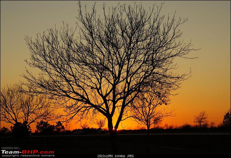 The Official non-auto Image thread-sunset-tree.jpg