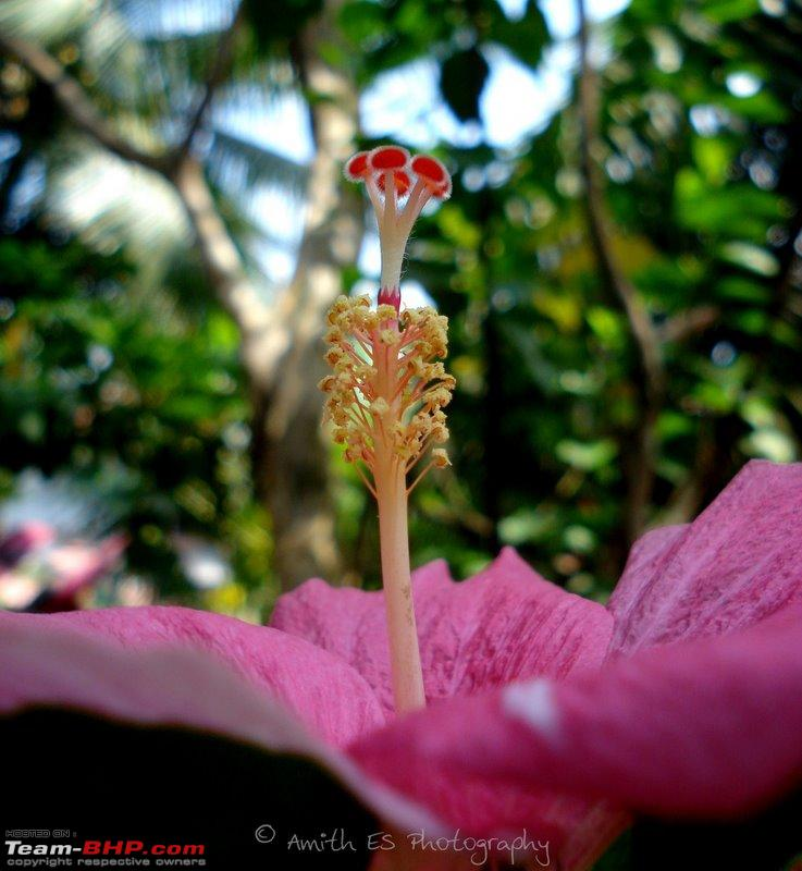 Name:  Hibiscus.jpg