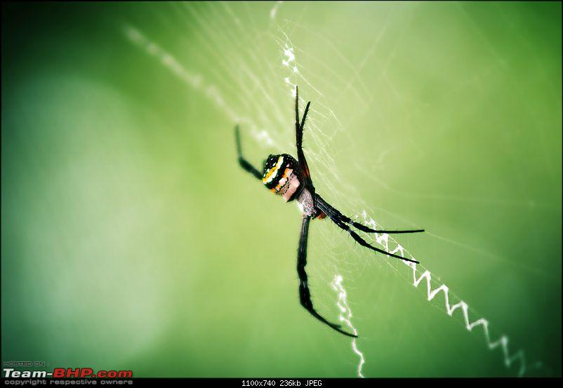 The Official non-auto Image thread-spider.jpg