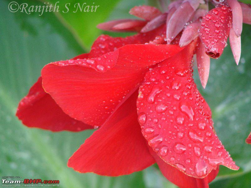 Name:  flower.jpg Views: 234 Size:  108.3 KB