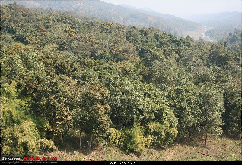Please Help in Saving AP's Forests and Wildlife-img_0213.jpg