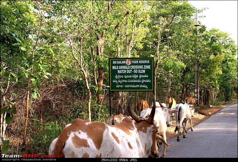 Please Help in Saving AP's Forests and Wildlife-cattle-forest-1.jpg